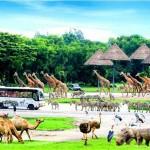 Tham quan Safari Vinpearl Condotel Phú Quốc có những gì?