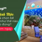 [Giải đáp] Hướng đặt bể cá cho người mệnh Mộc